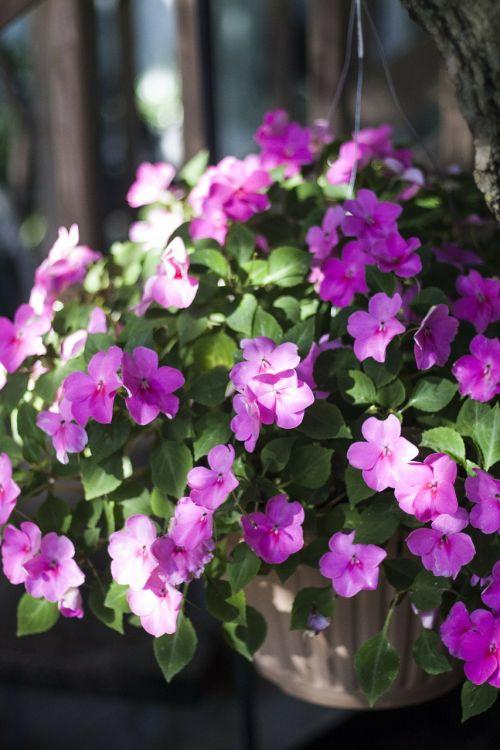 flowers,basket,floral,plants,natural,blossom,bloom,petals,botanical,organic,stem,botany,herb,agriculture,outdoors,environment,leaf,flower bed,vegetation,horticulture