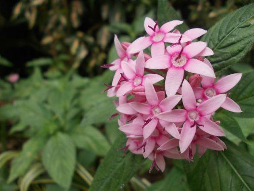 flowers floral wildflowers