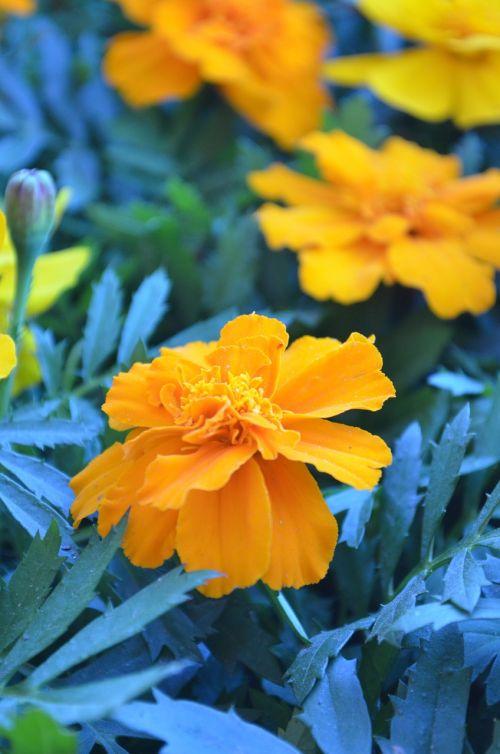 wonder flowers gerberas