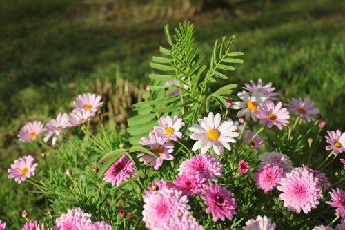 flowers cluster landscape