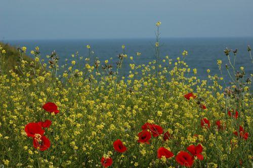 flowers sea mack