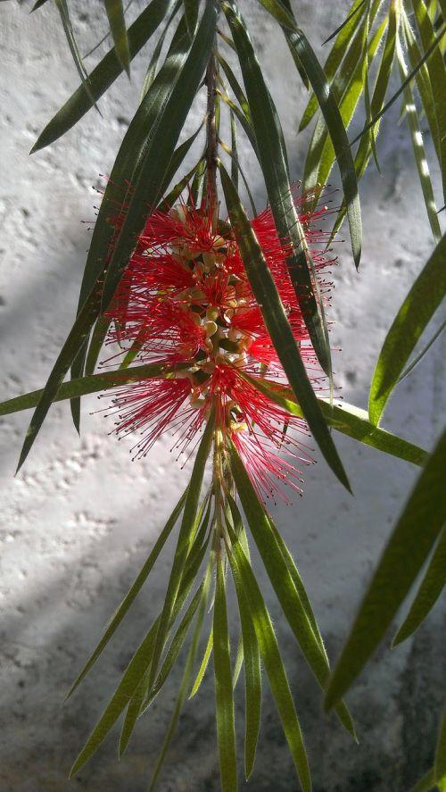 flowers red garden