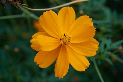 flowers petal autumn