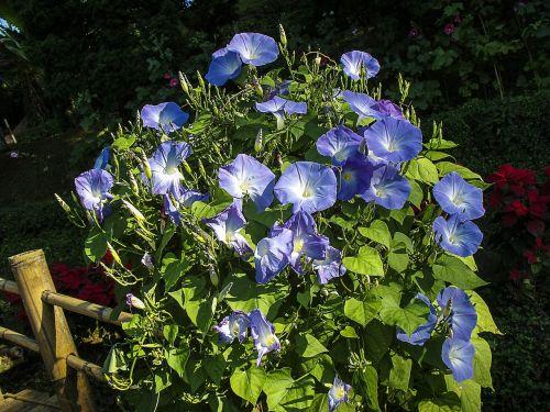 flowers flower ranke