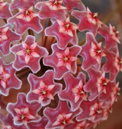 flowers head individual