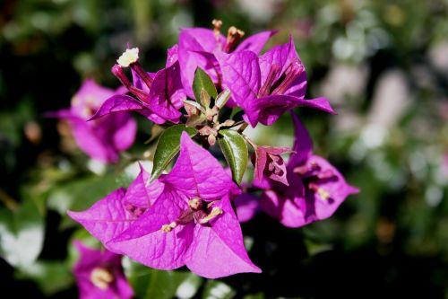 flowers deep pink petals