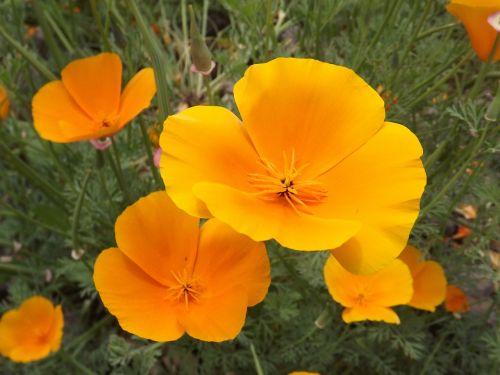 flowers yellow flower yellow flowers