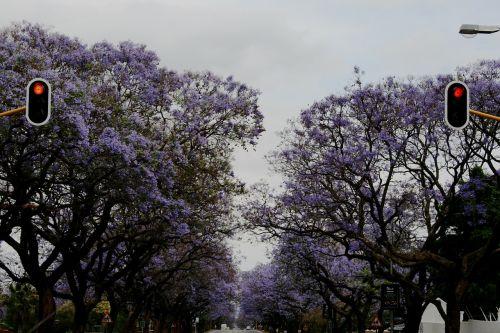 flowers purple clusters