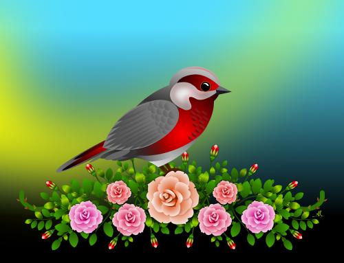 flowers roses garden