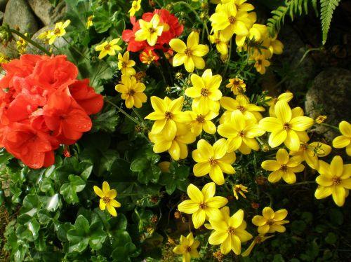 flowers garden plants