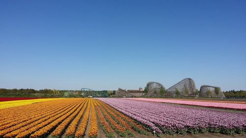 gėlės,kalneliai,Venlo
