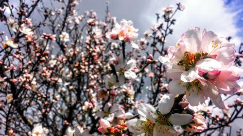 flowers spring coming soon