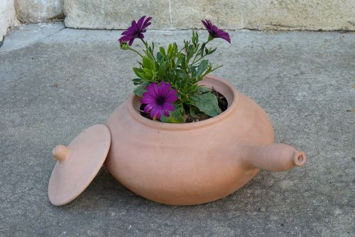 flowers clay pot terracotta