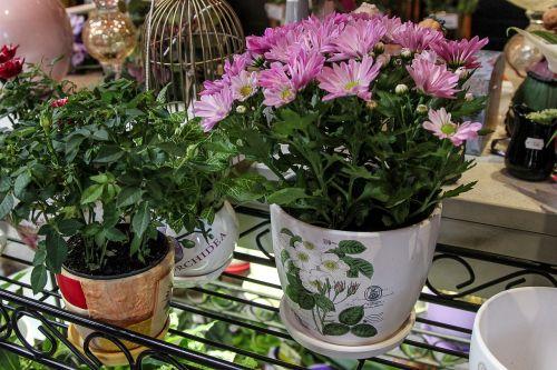 flowers pots plants