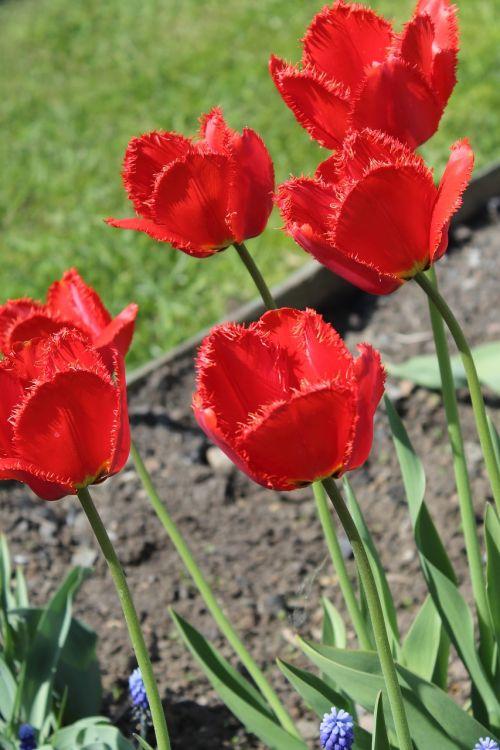 flowers maki nature