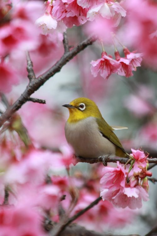 flowers cherry blossoms green embroidered eyes