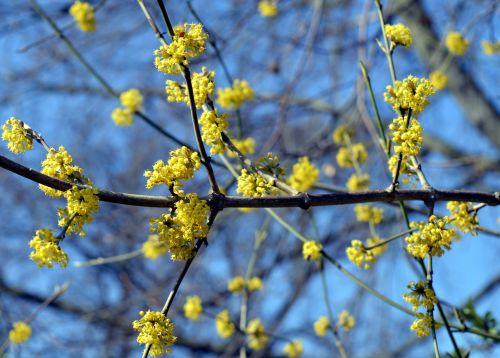 flowers tree blossoms flowering twig