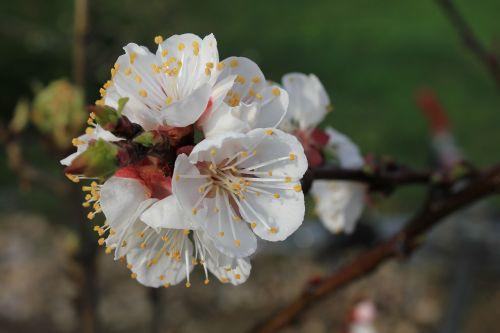 flowers bud spring