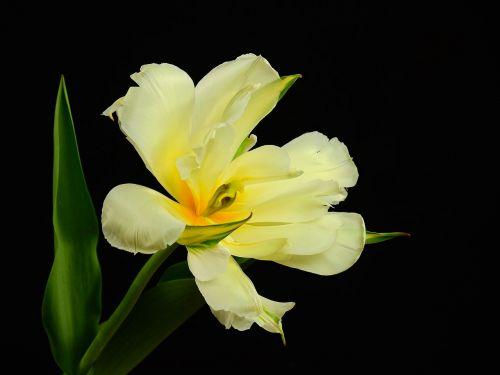 flowers bloom flower
