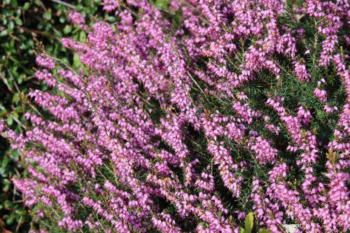 flowers purple bumblebee