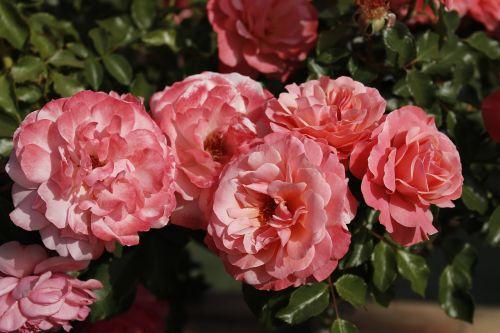gėlės,pavasaris,kvepalai,spalvinga,saulėtas