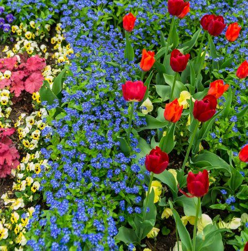 gėlės,tulpės,augalas,geltonos gėlės,pavasaris,gamta,geltona,raudona,rožinis,violetinė,pavasario gėlės,skintos gėlės,žydėjo,žydėti,žalias