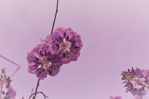 flowers point purple taste