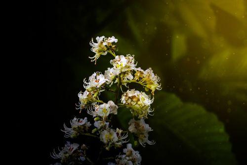 flowers visual composer light