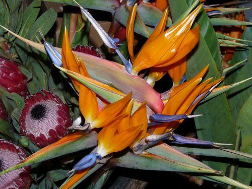 flowers plant arrangement