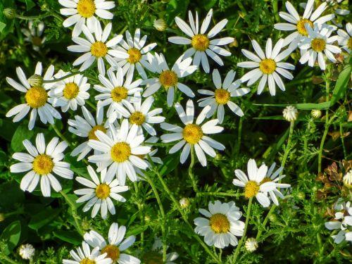 flowers field meadow flower
