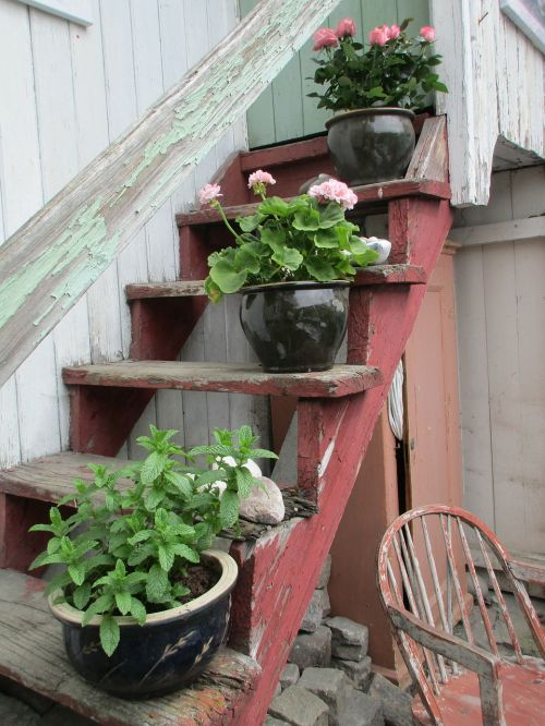 flowers stairs summer