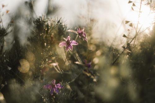 flowers moody dull