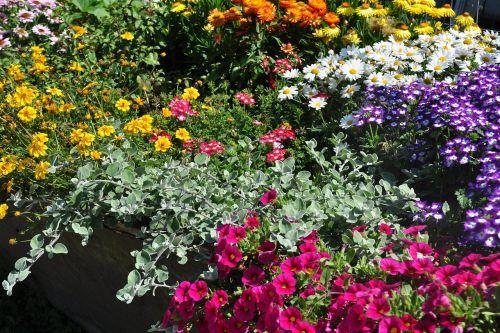 flowers color blossom