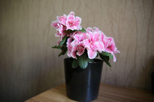 flowers patern backround