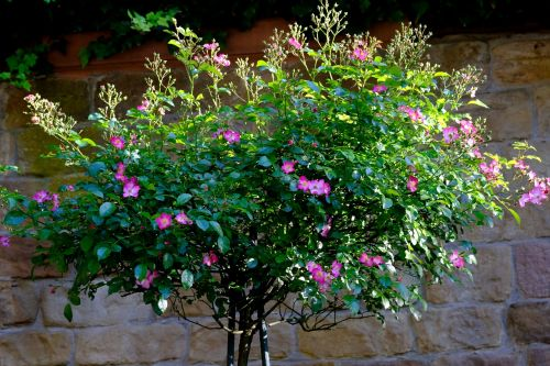 flowers arrangement deco