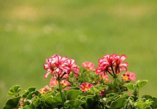 flowers plant planting
