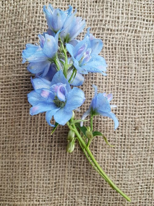 flowers larkspur decoupage