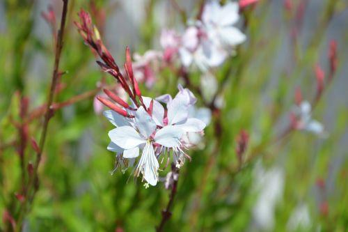 flowers white nature