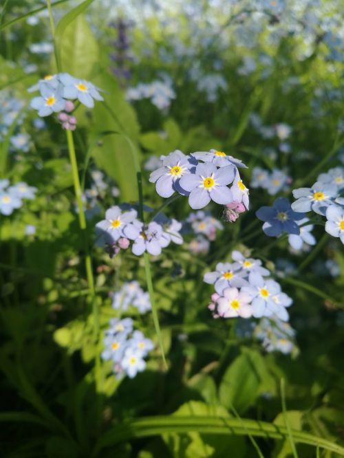 flowers macro summer flowers