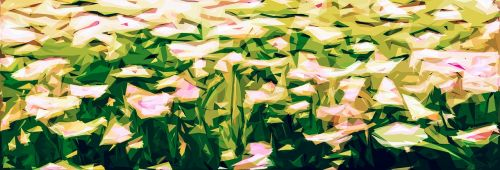gėlės,pieva,žydėti,laukas,lauko gėlės,gėlių kilimas,žolė,vasara,vasaros gėlės,pievos gėlės