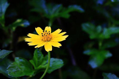 flowers nature flower