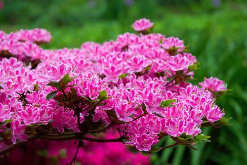 flowers bokeh macro