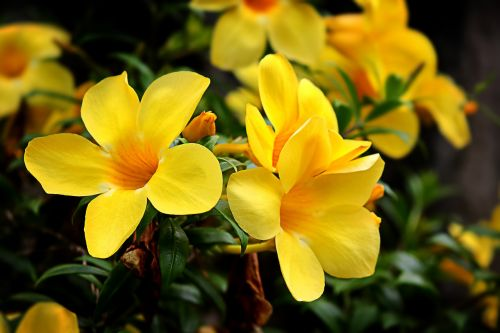 flowers flowering flowering plant yellow flower garden