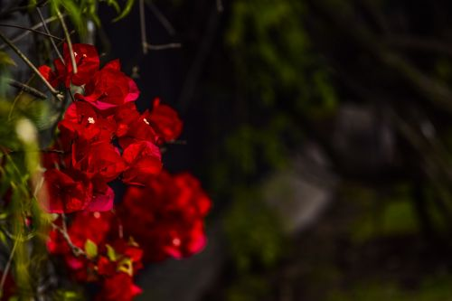 flowers,flora,spring,red,cluster,green