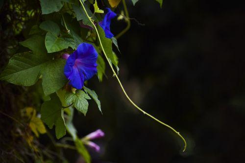 flowers,flora,spring,purple,violet,green,cluster