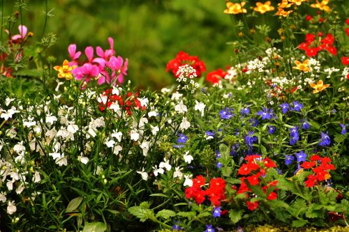 flowers,colorful,colorful flowers,nature,garden,spring,beautiful,color,plant,summer,mood,decoration,deco,decorative