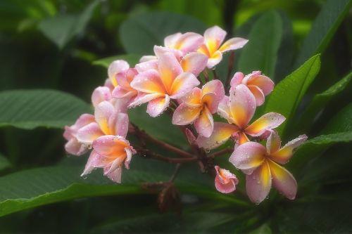 flowers morning refreshing
