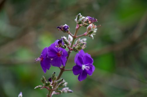 flowers garden color