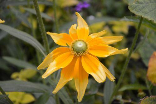 flowers stars yellow