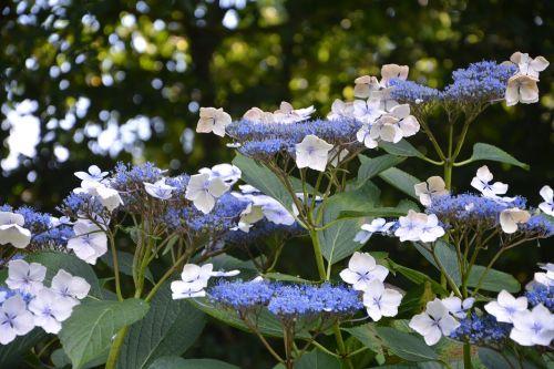 flowers small flowers flowering